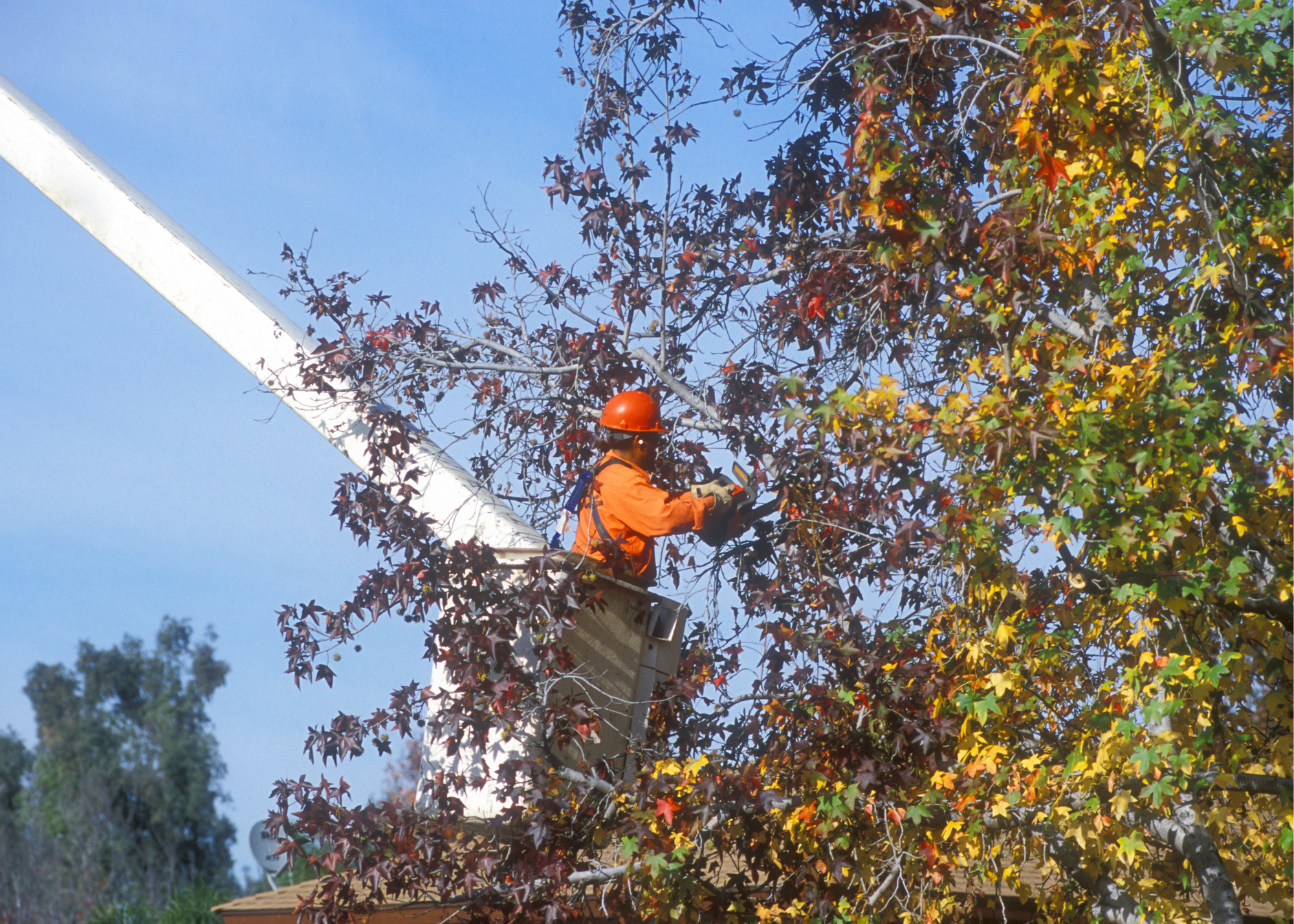 tree trimmers Tucson